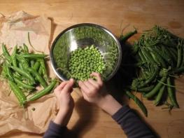 Ambassadors of spring: fresh peas.